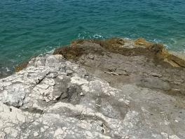 KRNICA, teren 1. red od mora
