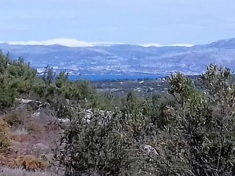 Brač, Milna, poljoprivredno zemljište s maslinama i pogledom na more