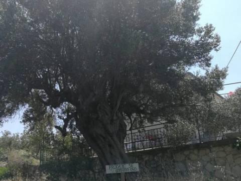 Drvenik veli: zemljište s objektom (18m2) za renoviranje