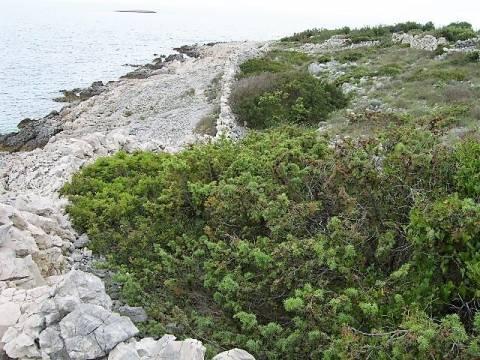 1. red do mora, poljoprivredno zemljište za investiciju na prodaju, Ražanj, Rogoznica