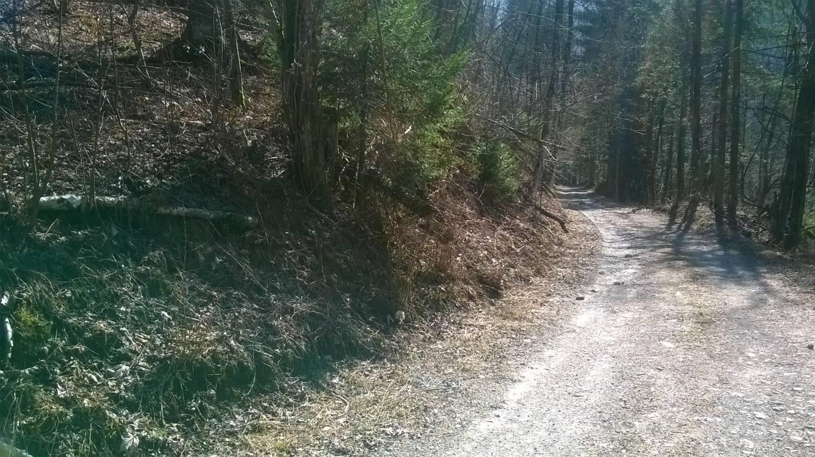 Gorski kotar, Nacionalni park, šuma