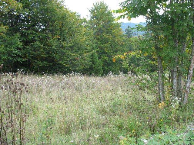 Grundstück Stari Laz, Ravna Gora, 10.644m2