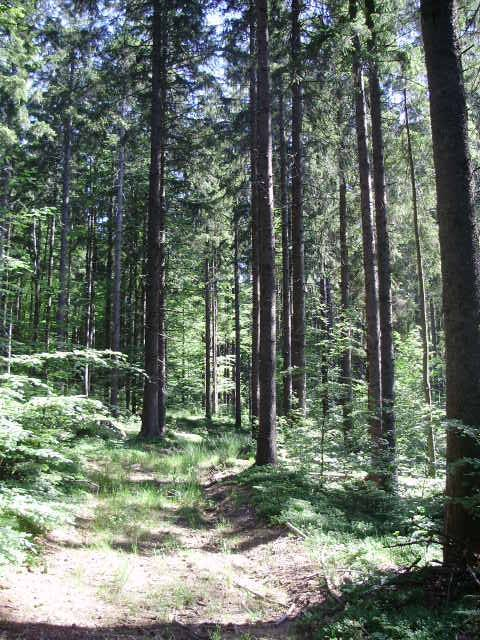 Grundstück Ravna Gora, 9.987m2