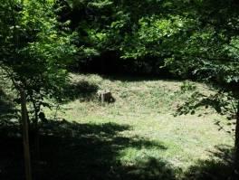 Gorski kotar, Kupska dolina, građevinsko zemljište