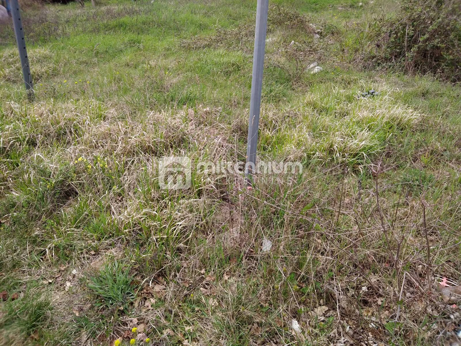 Land Kaldanija, Buje, 572m2