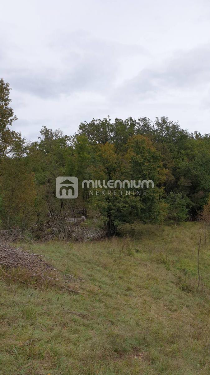 Saršoni, zemljište-šuma od 25.892m2