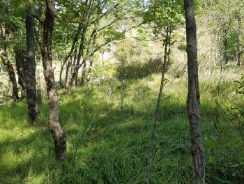 Klana, građevinsko zemljište 6.189m2