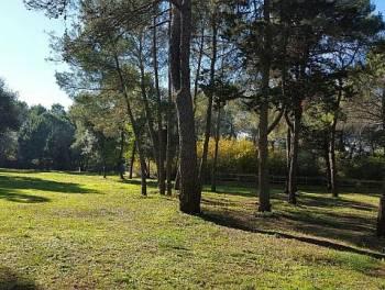 Istra, Rovinj, 12.000m2 atraktivno zemljište idealno za kamp ili glamping