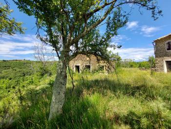 Istra, Momjan, 2 starine s 23.400m2 zemljišta