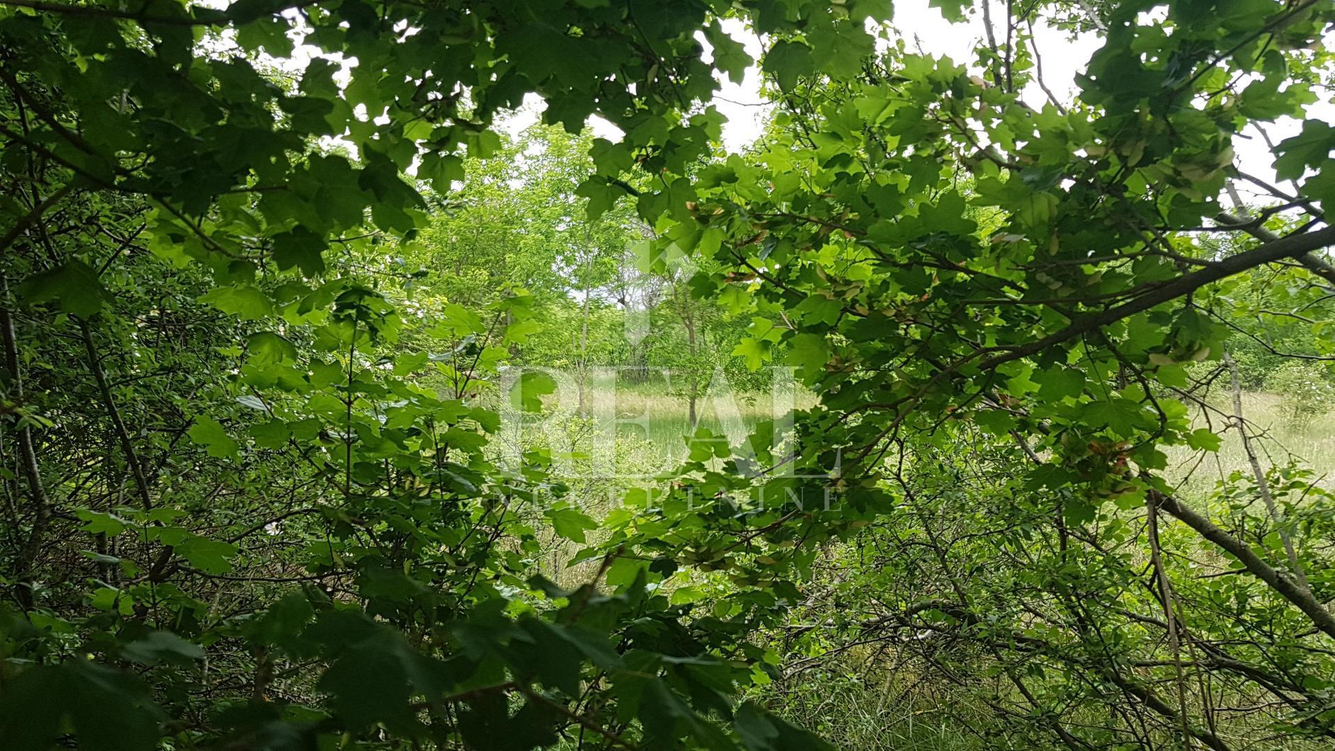 Istra, okolica Bala, Zemljište za vilu s bazenom od 640 m2