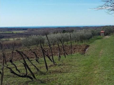 Vodnjan, zemljište za agroturizam ili OPG