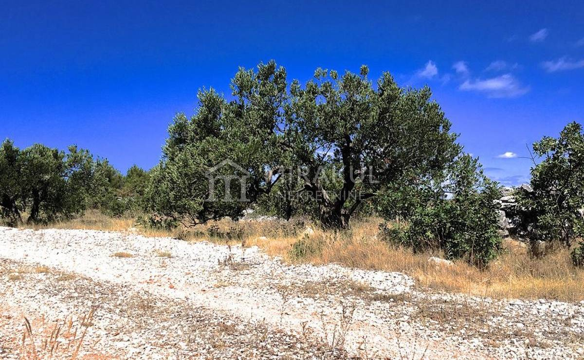 Properties Rogoznica Croatia, land, Mirakul Real Estate agency, ID - PR - 274, Agricultural land for family farm