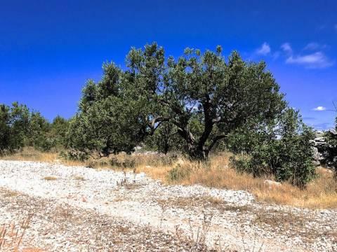 Ingatlan Rogoznica Horvátország, telek, Mirakul ingatlaniroda, ID - PR - 274, Mezőgazdasági telek családi gazdaságra