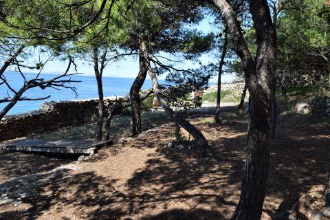 Nekretnine Murter, Prodaja kamene kuće u borovoj šumi, prvi red do mora sa pogledom na Kornate, KM-543, Mirakul nekretnine 2