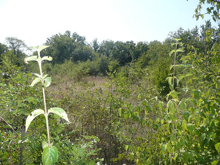 Okolica Šilo, prodamo, zazidljivo zemljišče + kmetijsko zemljišče na mirni lokaciji!