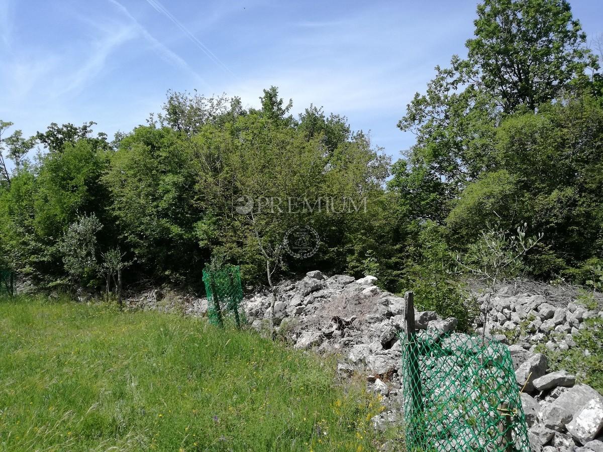 Malinska območje, kmetijska zemljišča z oljčnimi prodamo!!