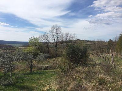 Zemljišće Krasica, Buje, 3.519m2