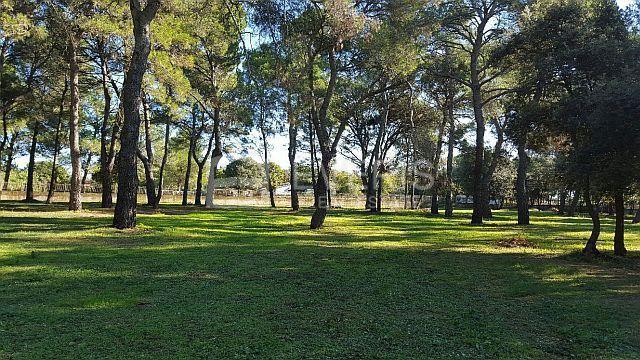 Grundstück Rovinj, 12.058m2