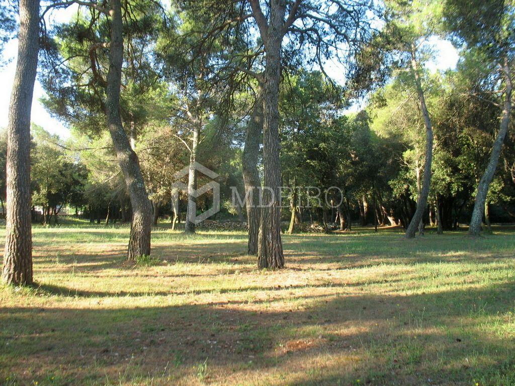 Rovinj, zemljište turističke namijene 12.058 m2