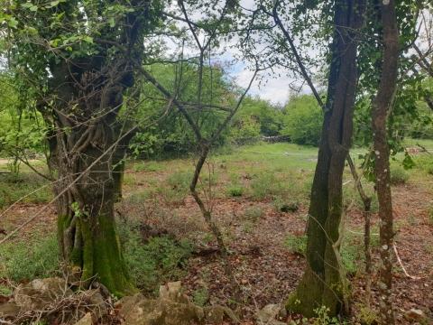 Otok Krk, idila u zelenilu