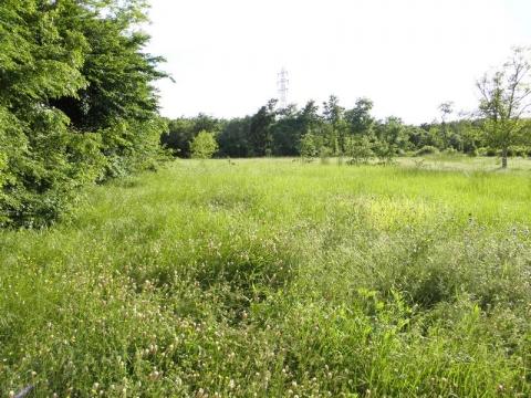 BARBAN - DRAGUZETI - građ.zemljište 1500m2 i 5000m2 poljoprivrednog