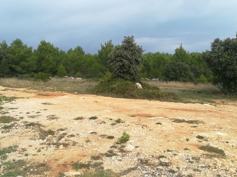 Poljoprivredno zemljište u blizini mosta - Vir